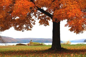 fall-foliage-Quabbin